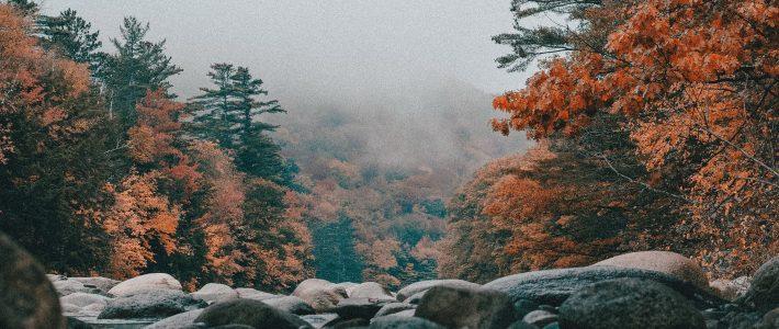 """""""Voy a ser como los árboles. Dejaré ir lo viejo para dar paso a todo lo nuevo"""""""